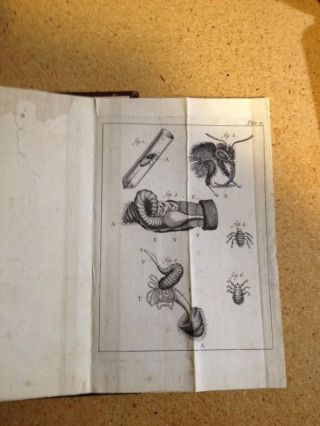 The Natural History of Bees. Containing An Account of Their Production, Their Oeconomy, the Manner of Their Making Wax and Honey, and the Best Methods for the Improvement and Preservation of Them